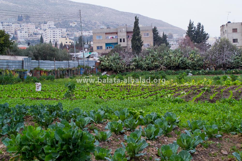 مزرعة أبو راني/جمال محمد أسعد (شباط 2013)